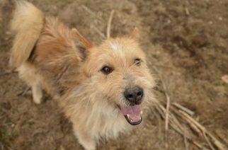Psy do adopcji z Dąbrówki