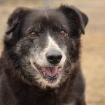 Psy do adopcji z Dąbrówki [GALERIA]