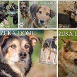 Psy do adopcji z Dąbrówki: siódemka czeka na dom [ZDJĘCIA]