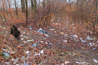 Śmieci i odchody w Gaju Świętopełka
