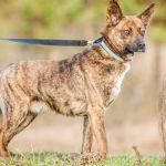 Psy do adopcji: Fuks dla właściciela domu z ogrodem [ZDJĘCIA]