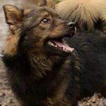 Psy do adopcji: uśmiechnięty Majki [ZDJĘCIA]