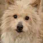 Psy do adopcji z Dąbrówki: Leo [ZDJĘCIA]