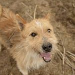Psy do adopcji z Dąbrówki: Tolek