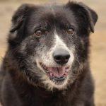 Psy do adopcji z Dąbrówki: Tysia [ZDJĘCIA]