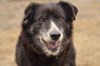 Psy do adopcji z Dąbrówki: Tysia