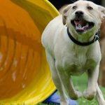 Puchar Planet Pet Society Rally Obedience  2016, czyli psie zawody na Hipodromie w Sopocie