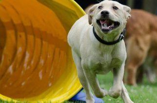 psie zawody na Hipodromie w Sopocie