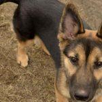 Psy do adopcji z Dąbrówki: Leszka [ZDJĘCIA]