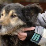 Psy do adopcji z Dąbrówki: Lorek [ZDJĘCIA]