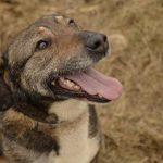Psy do adopcji z Dąbrówki: pieszczoch Grugo [ZDJĘCIA]