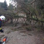 Orkan na Kaszubach: awarie prądu i powalone drzewa
