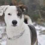 Psy do adopcji ze Schroniska w Dąbrówce: Dario [ZDJĘCIA]