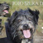 Psy do adopcji ze schroniska w Dąbrówce: Prezes szuka domu [ZDJĘCIA]