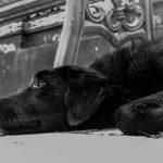 Okrutnie znęcał się nad psem, a ostatecznie go zabił. Miał 2 promile alkoholu we krwi