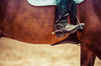 Czy to koniec leśnych przejażdżek konnych?