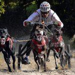 O psich zaprzęgach z mistrzem świata. W piątek spotkanie w Kartuzach