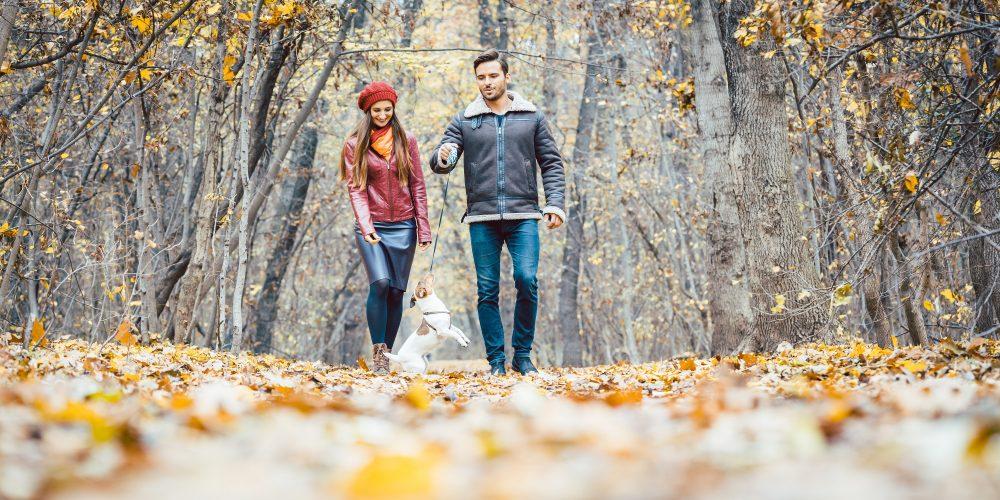 Jesienne spacery – pozostań widocznym na drodze dzięki odblaskom