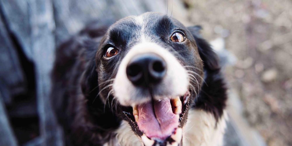 Forma Fitness Club organizuje zbiórkę dla bezdomnych zwierząt