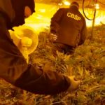 Trzy kolejne osoby zatrzymane w sprawie gigantycznej plantacji marihuany w Łapinie Kartuskim