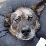 OTOZ Animals prosi o naszą pomoc! Trwa zbiórka na diagnostykę, leczenie i operacje zwierząt