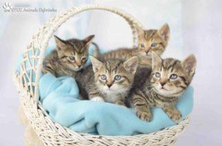 Aurora, Luxoro, Krylan i Femax czekają na nowy dom! – OTOZ Animals w Dąbrówce [ZDJĘCIA]