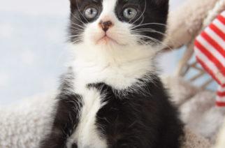 Kotek czeka na Wasze propozycje imion! Weź udział w konkursie SMS i wygraj cenne nagrody!