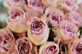 Kwiaty z okazji i bez okazji – jak wybrać i gdzie szukać ?